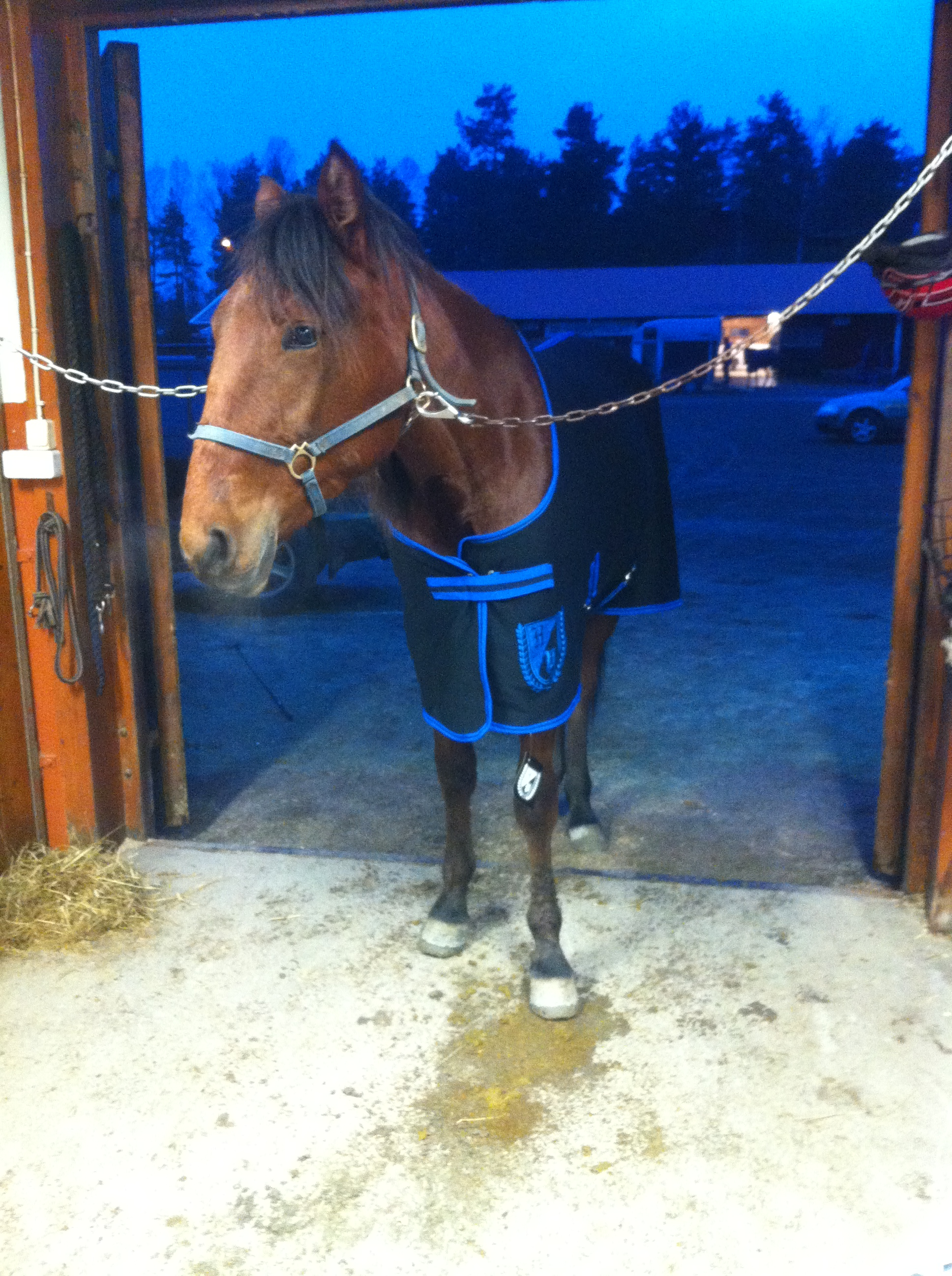 inflammation i nacken häst